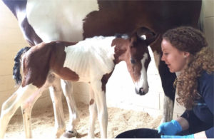 A veterinarian should examine the mare and foal within 24 hours of birth.