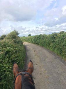 horses, equine vet, vet nurse, horse vet, show jumping